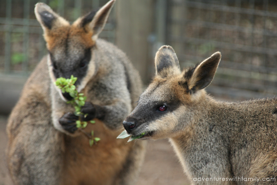 Featherdale Wildlife Park Sydney