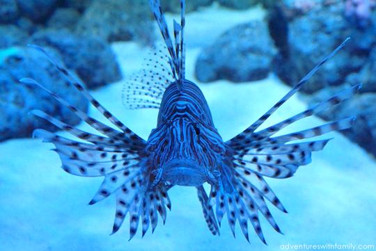 SEA Aquarium Marine Life Park Sentosa