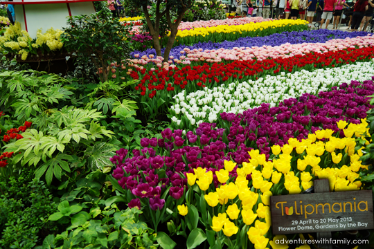 tulipmania gardens by the bay