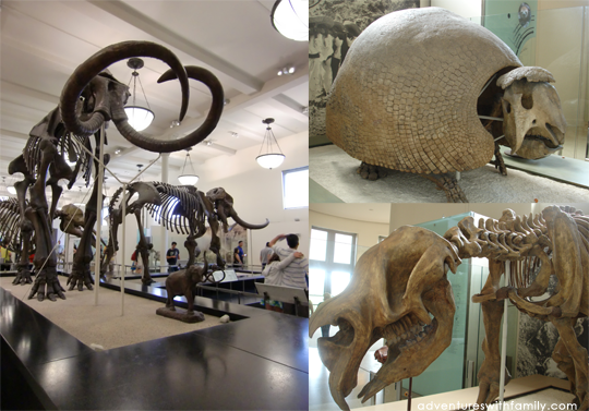 New York Museum of Natural History