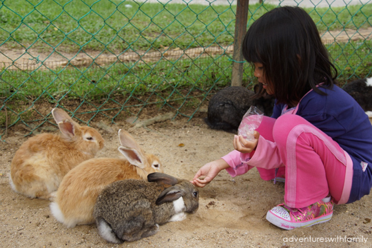 Feeding Rabbits