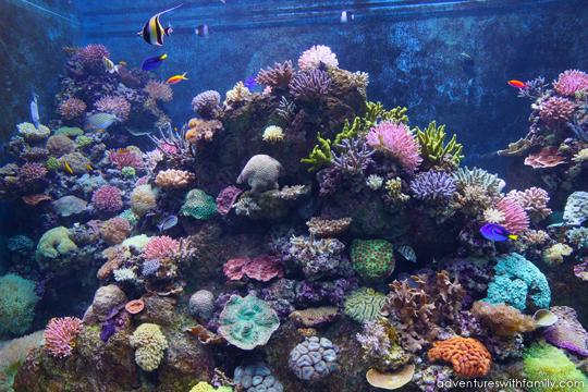 SEA Aquarium Marine Life Park Sentosa - Adventures with Family