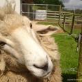 Farm stay, New Zealand