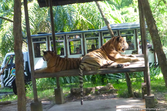 Bali Safari and Marine Park - Adventures with Family