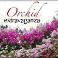 Gardens by the Bay - Orchid Extravaganza